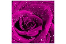 0043.02-F (купон 0,75х0,75) роза