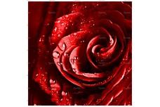 0044.01-F (купон 0,75х0,75) роза