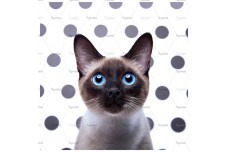 0064.01-F (купон 0,75х0,75) сиамский кот