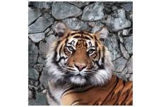 0089.01-F (купон 0,75х0,75) тигр